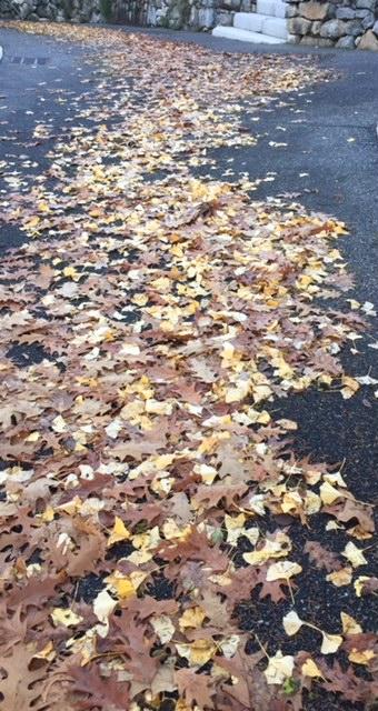 chemin de feuilles mortes